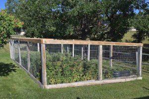 garden engaged in a fence of wire mesh to protect from wildlife damage
